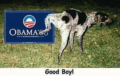 dog-pees-on-o1