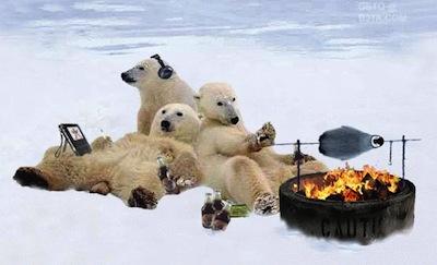 polarbearschilling