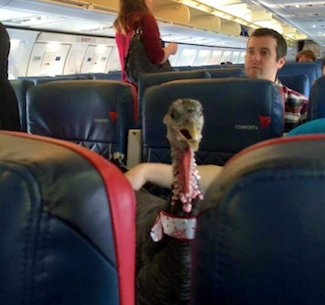 turkey-on-a-plane